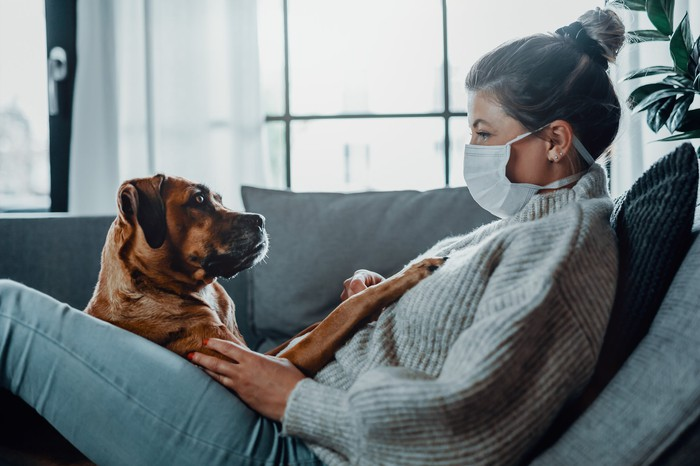 A woman in coronavirus mask, sitting on the sofa with a large dog.