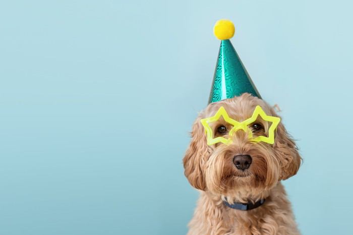Dog with a party hat and glasses on.