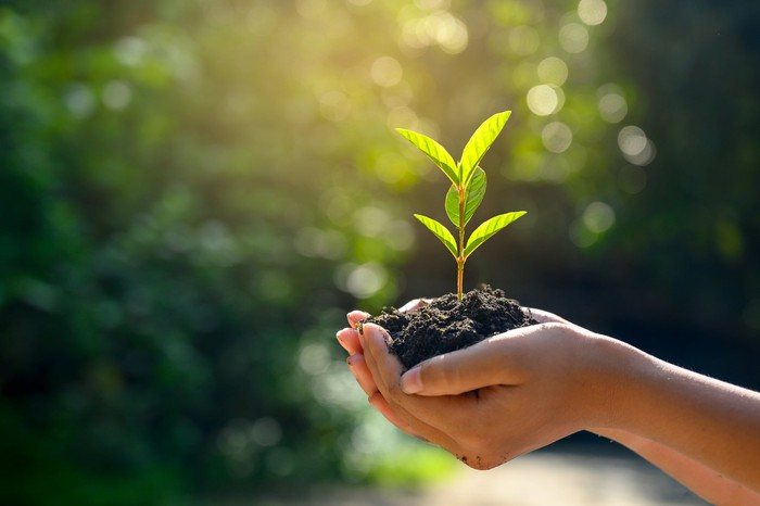 Hands holding soil and young plant.