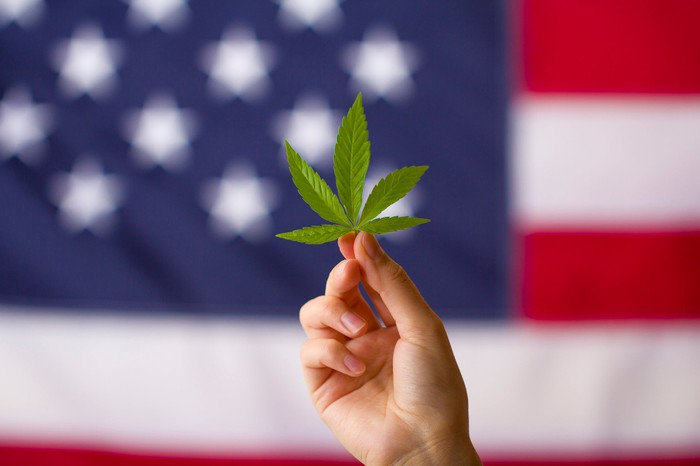 A cannabis leaf is held in front of an American flag background.