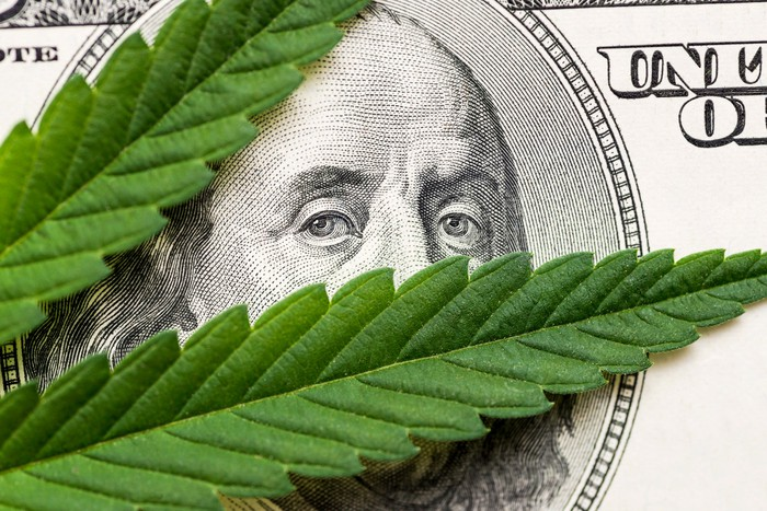 Ben Franklin on hundred dollar bill peaking through two cannabis leaves.