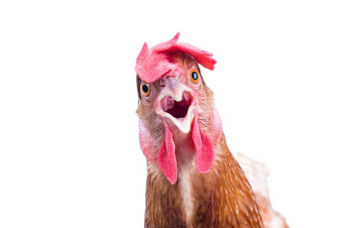Surprised chicken