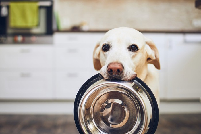 A dog holding a metal food bowl in his mouth.