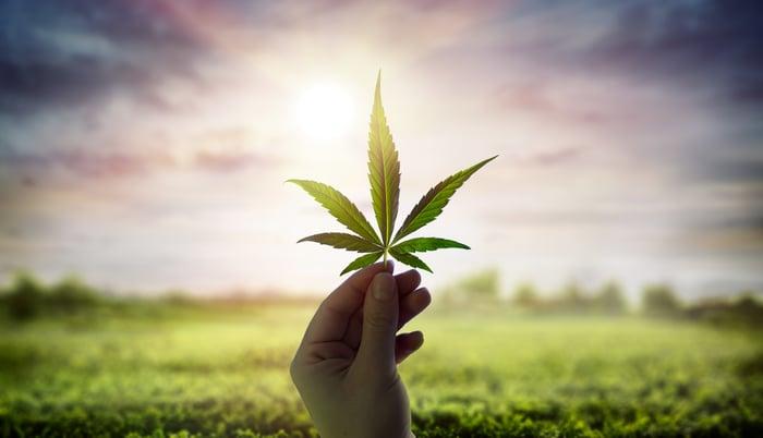 A hand holds a cannabis leaf up against the sky.