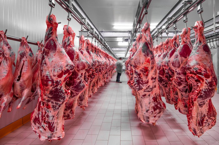 Calve carcasses hanging in a freezer