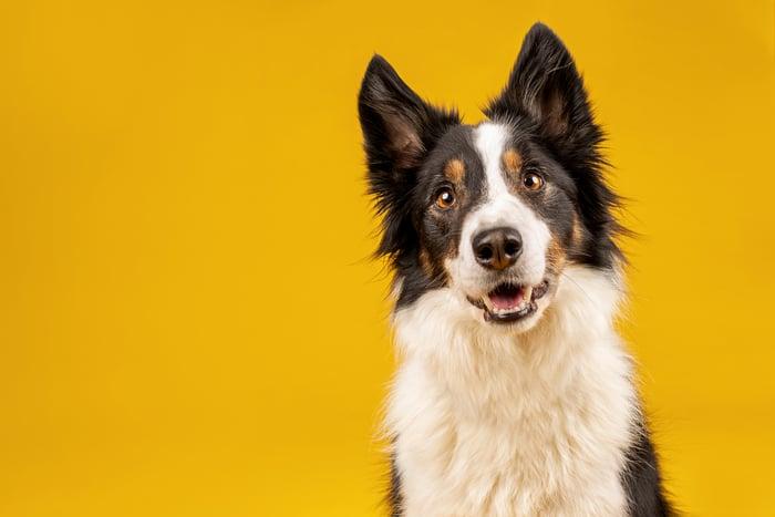 A sitting, smiling dog