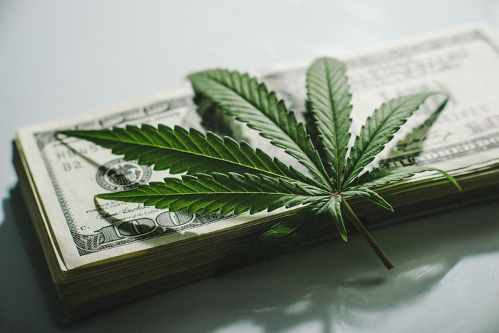 A cannabis leaf is on top of a stack of $100 bills.