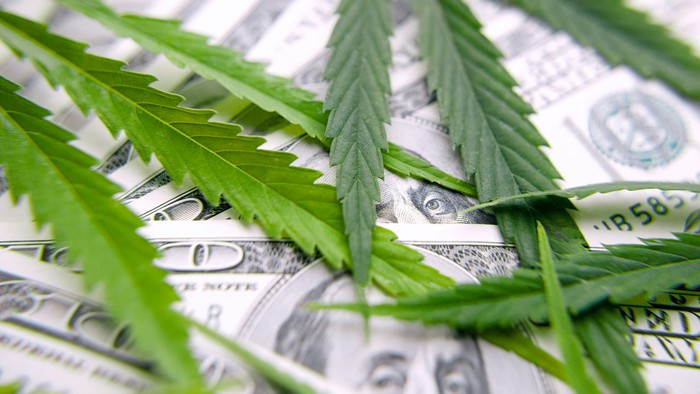 Cannabis leaves on top of $100 bills.