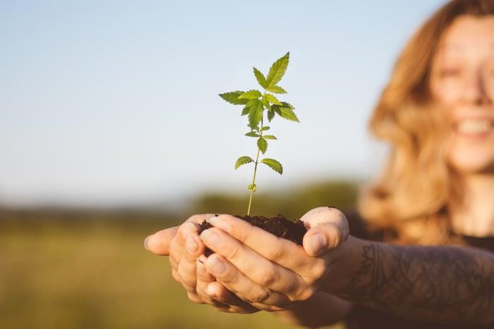 Happy woman holding marijuana seedling.
