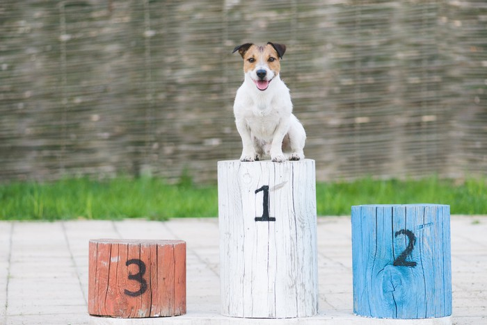 Dog sitting on a first-place podium