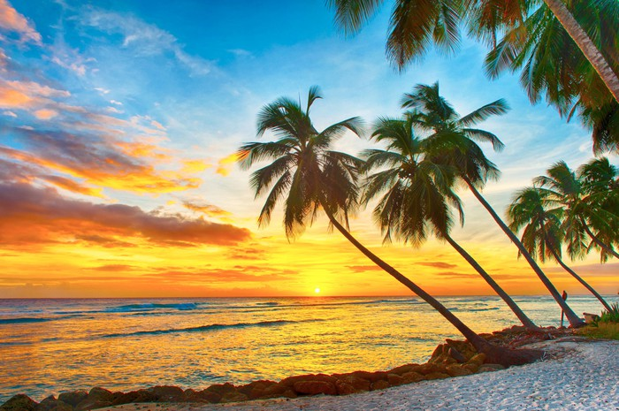 A white sand beach and leaning palm trees in front of a yellow sunset on Barbados.