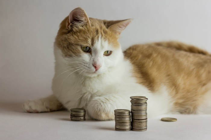 A cat lying next to and looking at two stacks of coins.