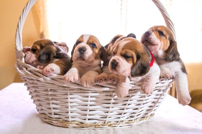 White basket full of puppies.