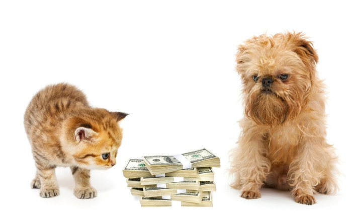 A kitten and a puppy between stacks of money.