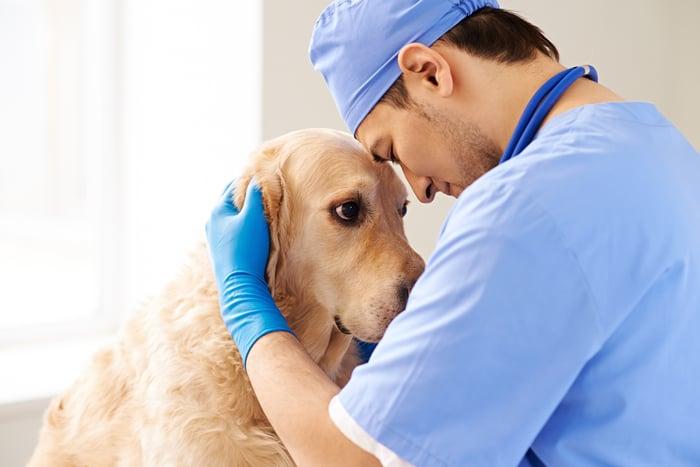 Sad golden retriever being hugged by vet.