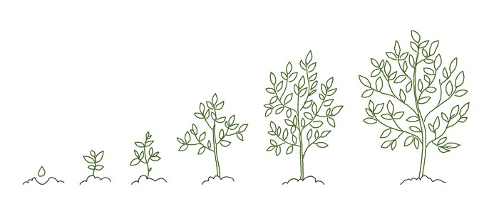 Six trees showing growth from seedling to full plant