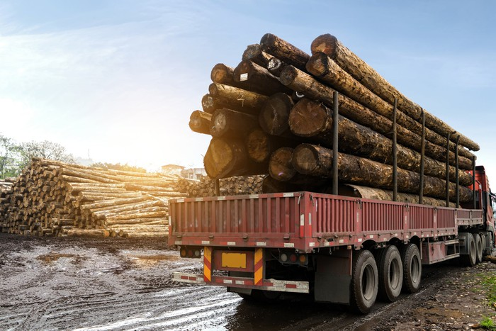 A semitrailer with massive logs piled on it, with more large logs in the background