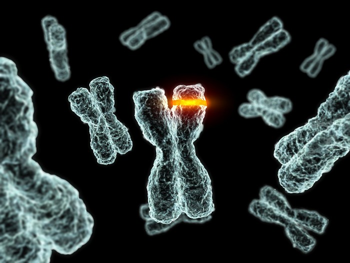 A region of a human chromosome is restricted by a glowing band.