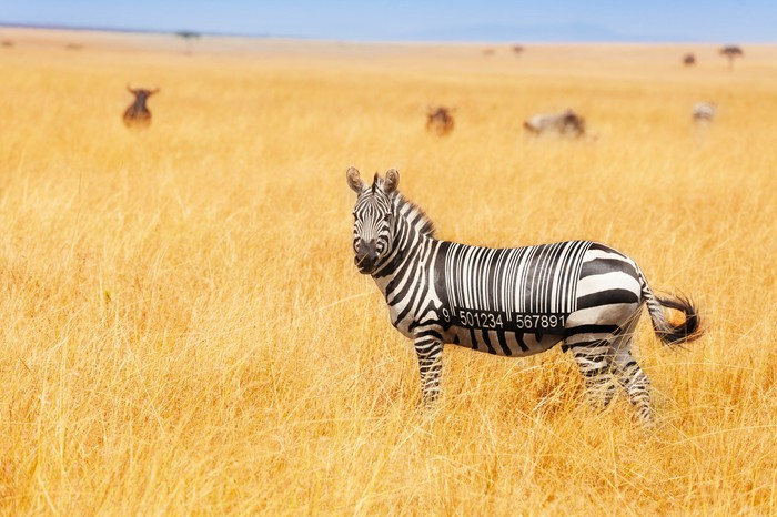 A zebra stands on an open savanna with a barcode mixed into its ordinary stripes.