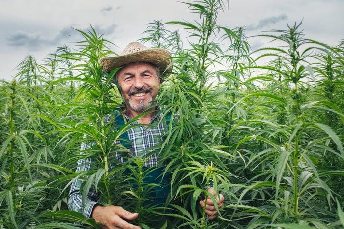 Happy farmer standing in a hemp field
