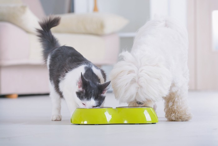 A cat and dog eating side by side from a lime green bowl.