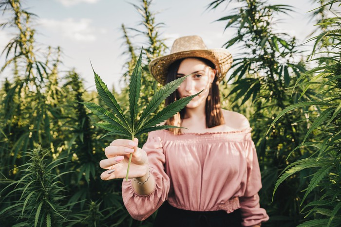Woman standing in field of marijuana plants holding marijuana leaf