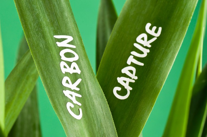 Grass blades with carbon capture written on them.