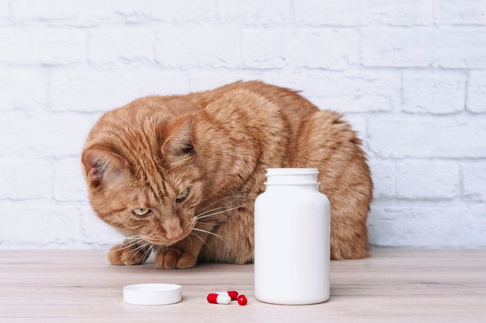 Cat looking at pills on a table