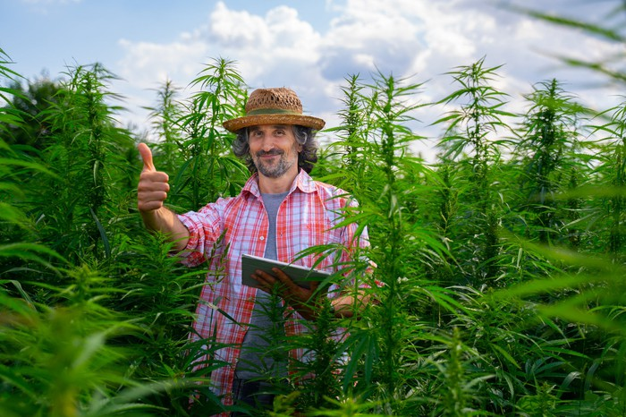 marijuana farmer with laptop giving thumbs up in field
