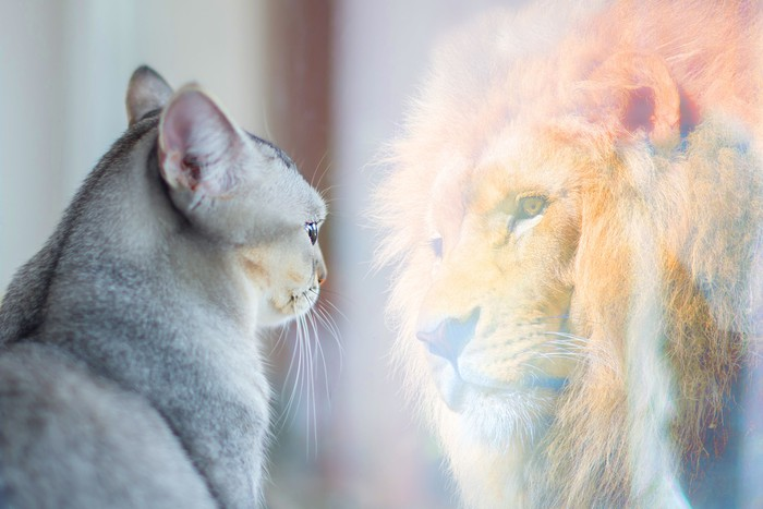 A small cat looks in a window and sees itself as a fierce lion.