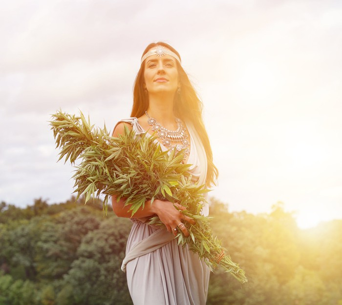 Beautiful woman holds a huge cannabis plant in her arms before a setting sun.