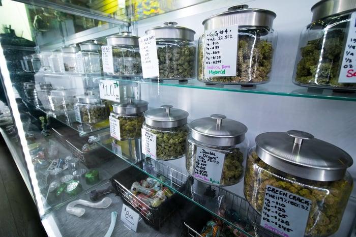 jars of marijuana flower buds on shelves in a dispensary