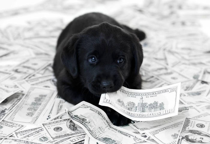Black puppy in a pile of money.