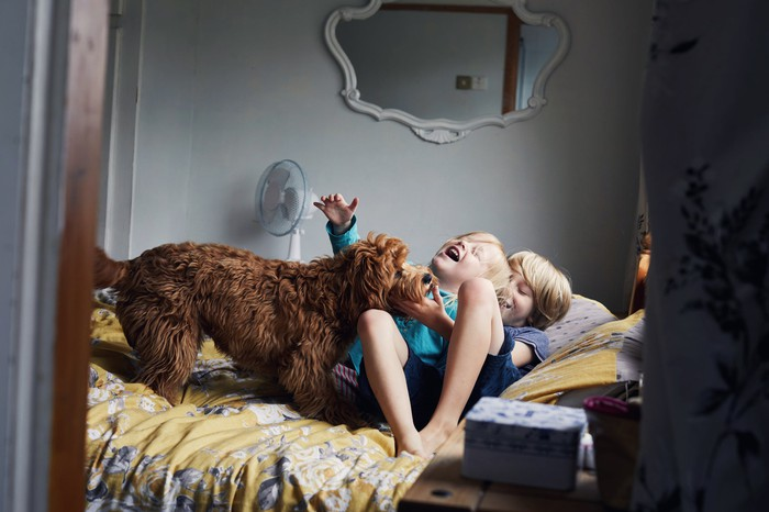 Two young children play with their pet dog on the bed.