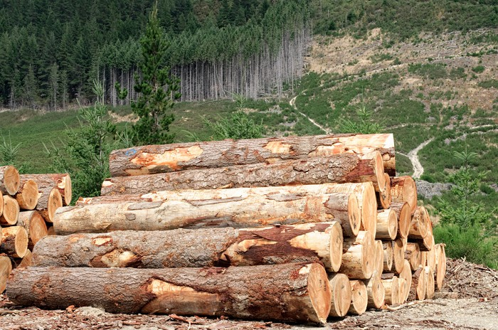 A stack of timber with a pine forest in the background.