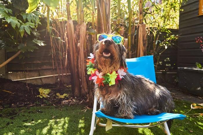 Shaggy dog portant des lunettes de soleil et collier de fleurs assis sur une chaise dans la cour