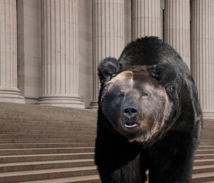 Bear walking on city street in New York.