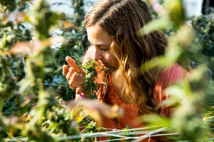 A farmer closely sniffs a cannabis sapling while standing amidst the other plants in her field.
