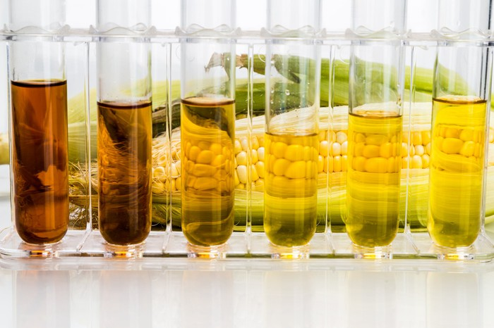 Test tubes with liquid in them in front of a cob of corn.