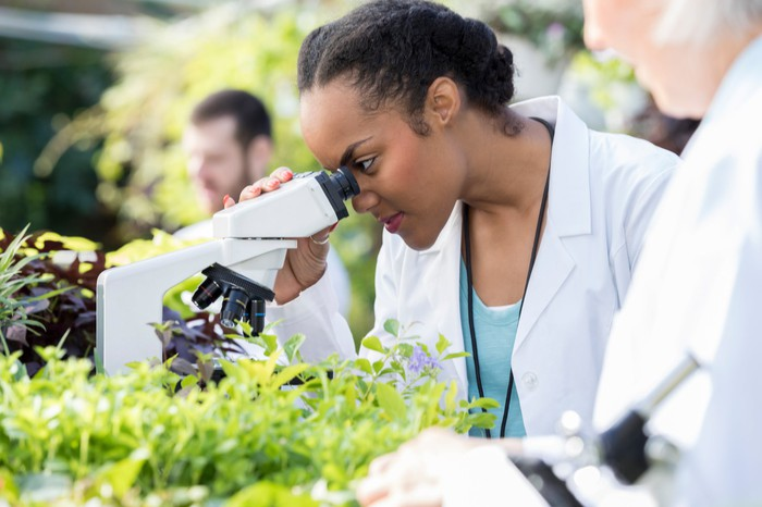 A person using a microscope in a greenhouse.