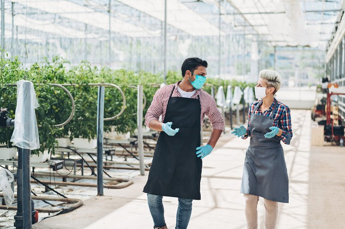 Two masked and gloved workers talking in a cannabis greenhouse.