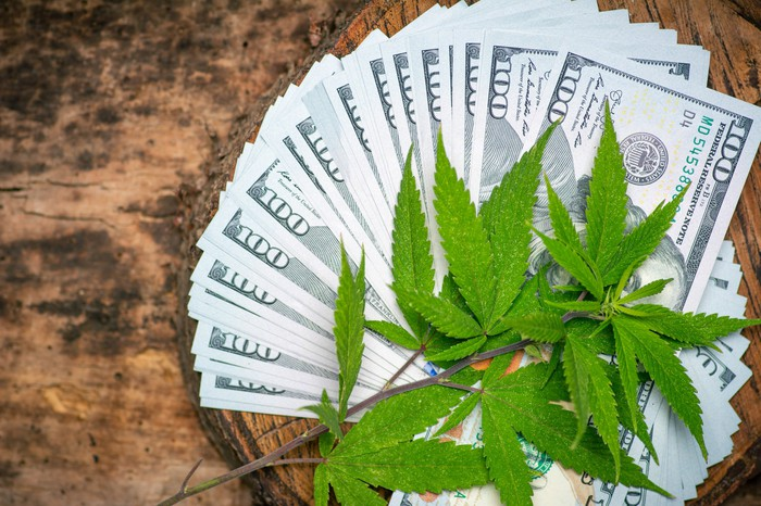 Marijuana leaves on top of fanned out $100 bills.