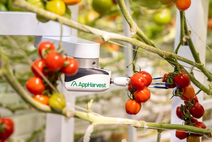AppHarvest robotics monitors tomato plants.