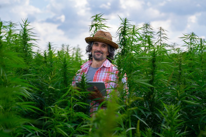 Smiling farmer holding tablet in a field of cannabis plants.