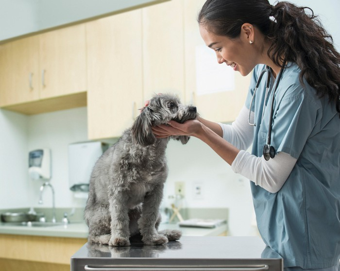 A veterinarian is examining a dog.