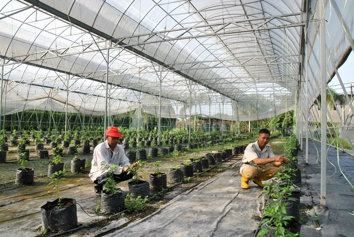 Two people working at a greenhouse.