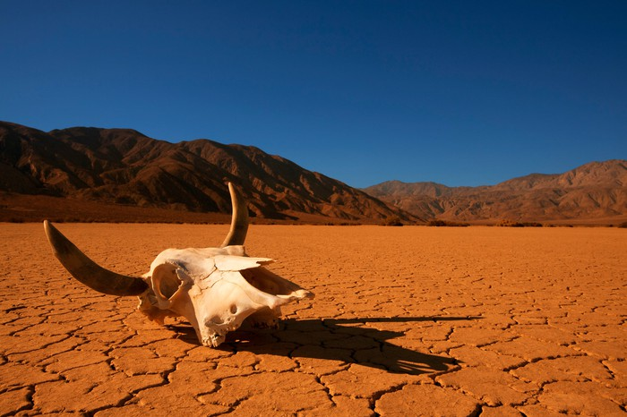 An animal skull lies on the cracked desert earth with mountains in the background.