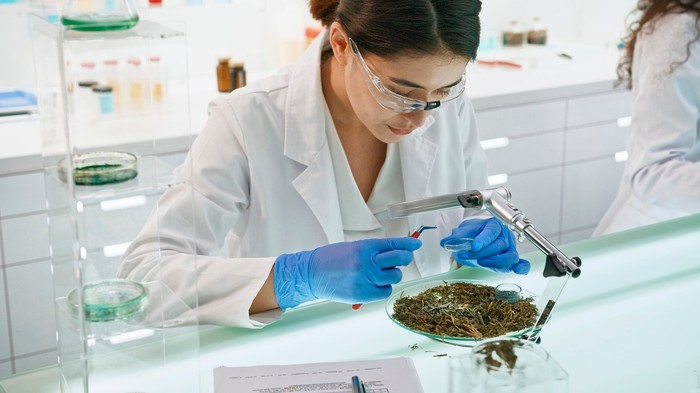 Person reviewing cannabis in a lab.