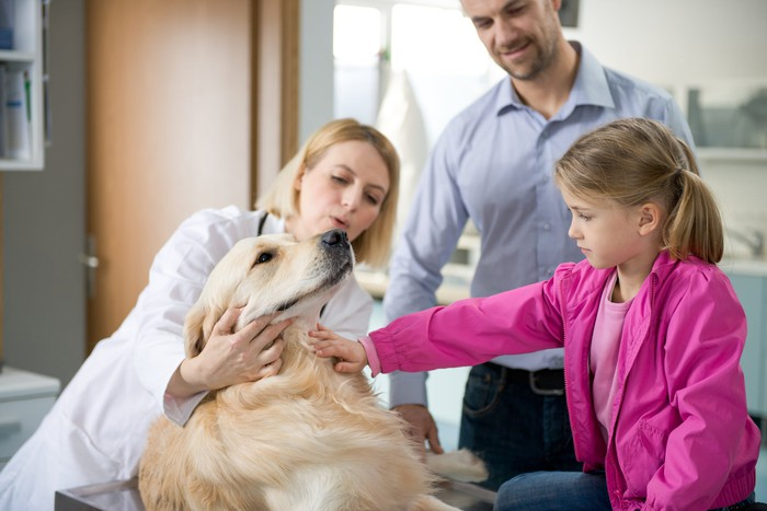 Female vet examining a Golden Retriever as young girl and man watch.