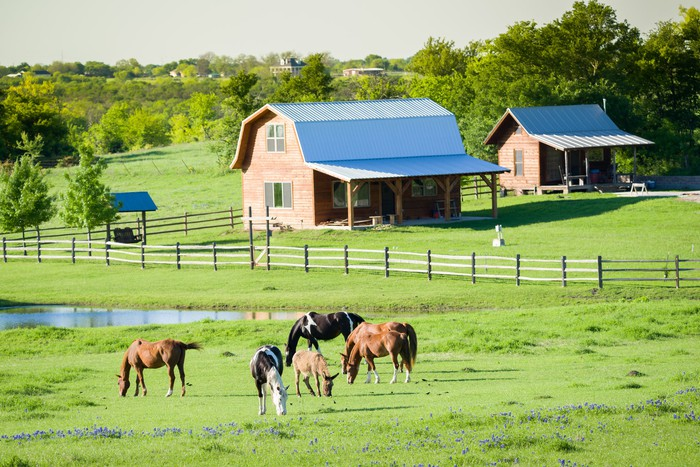 Horses graze in front of a farm.